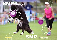 2013 Frisbee Dog Competition Karlsruhe Aug 31st
